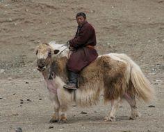 Discover Adventure - Mongolia - Mongolia Horse Trek