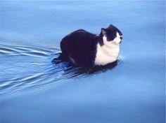 10 gatti che dimostrano di essere magici