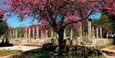 Πελοπόννησος, Πληροφορίες | Θέρετρο Grecotel Olympia Oasis