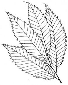 1000 Images About Leaves Coloring Page On Pinterest