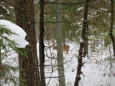 Loodusblogi Roe Deer, Westerns, Outdoor, Search, Outdoors, Searching, Outdoor Games, The Great Outdoors
