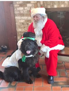 Finn the Newfie @finnthenewfie as a snowman posing with Santa for the paw-lidays.