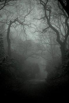 white-bitchwolf: Mist is my cape, trees are my...