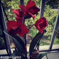 MIMA'S ORCHID <3