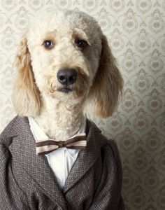 tweed? / (via Canine Chronicles on Photography Served)