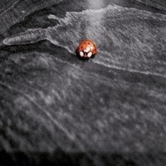 Cute little lady bug!