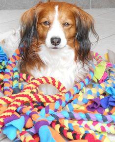 ¿Tienes perro por casa? Crea alguno de estos 10 juguetes caseros para perros y diviértete con tu mascota: rampas de madera, mordedores, cuerdas...