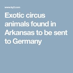 Exotic circus animals found in Arkansas to be sent to Germany