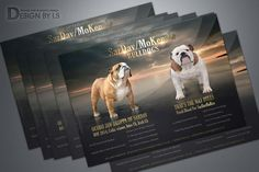 Web Design Services, Cattery, Thats The Way, Celtic, Graphic Design, Visual Communication