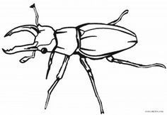Realistic Bug Coloring Pages Insect Coloring Pages, Animal Coloring Pages, Coloring Pages For Kids, Reindeer, Bugs, Stencils, Insects, Sketches, Printables