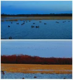 Cold day at the Golden Triangle Duck Club | Duck Hunting at the