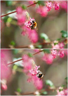 Herzenswärme Dandelion, Flowers, Plants, Animals, Heart, Animales, Animaux, Dandelions, Animal
