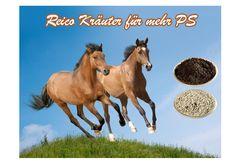 Bronho-Vital / Pferde für freien Atem von Reico http://hundkatzeschmaus.com/de/reico-pferde-ergaenzungsfuttermittel/bronho-vital-pferd-daempfig-pferdehusten-chronische-bronchitis-pferdekrankheiten.html