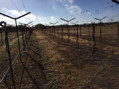 Finishing our second phase of pruning- 2016
