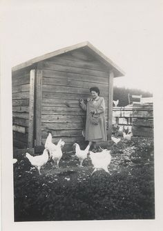 vintage chickens - she looks a bit scared of them! Antique Photos, Vintage Pictures, Vintage Photographs, Old Pictures, Vintage Images, Old Photos, Farm Pictures, Time Pictures, Farm Day