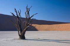 Abgestorbener Akazienbaum, Dead Vlei, Sossusvlei, Namibia