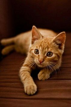 Best of Tabby Cats pictures: Pretty Cats, Beautiful Cats, Animals Beautiful, Cute Kittens, Cats And Kittens, Baby Animals, Cute Animals, Animals Images, Photo Chat