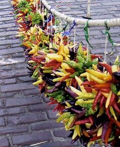 Hot peppers in many gorgeous colors.