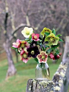 Flowers with large blooms (we used hardy hellebores) look great without any filler or extra greenery.  -- Cut stems to varying lengths: one or two short enough to just come over the vase's rim, three or four to fill in the middle, and five or six to spread out over the top.  -- Place in vase