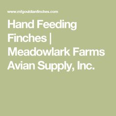 Hand Feeding Finches | Meadowlark Farms Avian Supply, Inc.