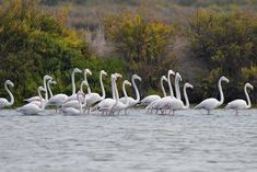 Best Time to See Flamingos in the Tagus Estuary Natural Reserve, Lisbon 2020 Visit Lisboa, Nature Adventure, Bird Watching, Natural Wonders, Lisbon, Outdoor, Tejidos, Outdoors, Outdoor Living