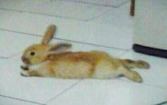 My Rabbit hihi