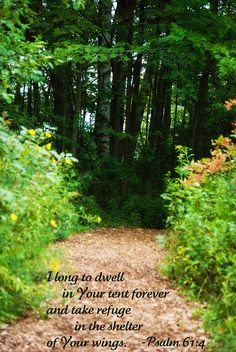 I long to dwell in your tent forever and take refuge in the shelter of your wings.  PSALM 61:4