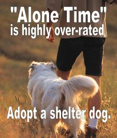 There is someone waiting for you to love them at your local animal shelter or rescue group - right now!