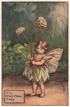 FLOWER FAIRIES/BOTANICALS: The White Clover Fairy; This is an original vintage Cicely Mary Barker Flower fairies colour print. It is not a modern reproduction, c1935; approximate size 11.0 x 7.0cm, 4.25 x 2.75 inches