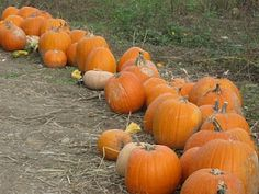 The Pumpkin Patch, we'll be going!!