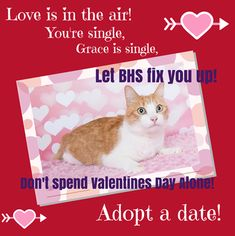 Plan Ahead: 10 Ways to Celebrate Valentine's Day   ASPCA Professional