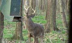 Top 3 Best Deer Feeders For The Money