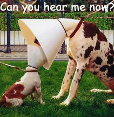 These Pets Are Making The Most Of Their Cones – Funny Animal Pictures