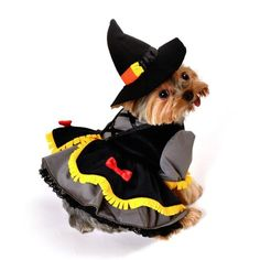 Shop Worthy Dog at Worthy Dog at PupRwear for Pet Halloween Costumes like our Scarecrow Witch Dog Costume Pet Halloween Costumes, Pet Costumes, Dog Halloween, Halloween 2014, Halloween Treats, Costume Ideas, Halloween Party, Yorkshire Terrier, Pet Dogs