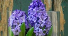 Witajcie :) Na samym początku dziękuję wam za wszystkie komentarze pod ostatnim postem :). Wiosna zbliża się do nas wielkimi krokami,... Bunt, Plants, Vases, Daffodils, Indoor House Plants, Windows, Sculptures, Lawn And Garden, Plant