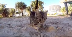 PSA: Watching Boomer's First Time In The Sand May Lead To Excessive Smiling | The Animal Rescue Site Blog