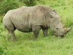 """Buchen Sie Ihren Familienurlaub mit einer Jeep Safari in Kenia. Erleben Sie von Juni bis September """"the Great Migration"""" , die grossen Tierwanderungen aus der Serengeti in die Masai Mara. Sichern Sie sich die besten Camps und Ihr Ferienhaus in Kenia bereits jetzt. Gerne unterbreite ich Ihnen individuelle Angebote für Ihren Traumurlaub in Kenia. http://www.safaris-in-kenia.de/kenia-safaris/"""