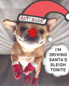 """I'm driving Santa's Sleigh tonite"", Happy Holidays, French Bulldog Reindeer at Christmas🎄 Mini Bulldog, Cute French Bulldog, French Bulldog Puppies, French Buldog, Baby Animals, Cute Animals, Cutest Dog Ever, Mini Dogs, Dog Quotes"