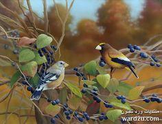 الحياة البرية فى لوحات الفنان Bradley Jackson