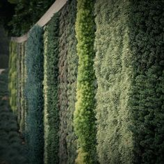 A living wall. Succulents hang in patterns on this Beverly Hills, California, wall. The plants were grown offsite, then installed into a panel system with an integrated irrigation system.