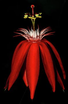 Red Hot Passion Photograph - Red Hot Passion Fine Art Print