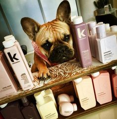 KEVIN.MURPHY never tests on animals!