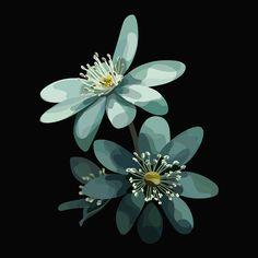 Mathilde Crétier — FILLIN Art Floral, Plant Illustration, Digital Illustration, Pop Art, L'art Du Portrait, Creative Poster Design, Affinity Designer, Guache, Graphic