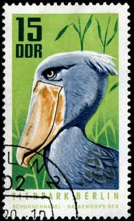 Shoebill, issued by the DDR (East Germany) to publicize the Berlin Zoo on October 6, 1970, Scott No. 1244