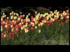 Spring at The Butchart Gardens #butchartgardens #canada