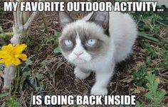 Image result for grumpy cat quotes disney