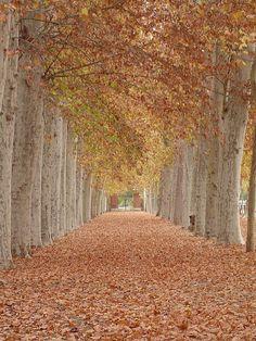 Jardín del Príncipe, Aranjuez