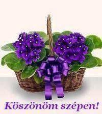 Wicker Baskets, Floral Arrangements, Plants, Decor, Google, Rose Flower Arrangements, Decoration, Flower Arrangements, Decorating