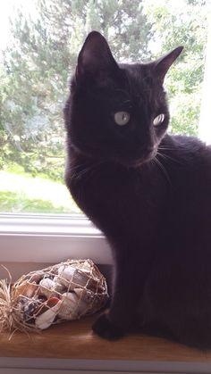 Fredo aka the brother of Vito aka Fred the Cat