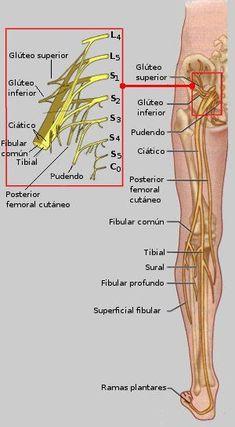 prévention des blessures à l'aine  sollicitation